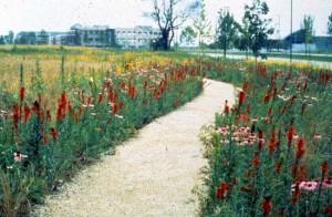 Natural lawn walk