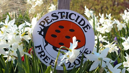 pesticide free zone ladybug sign