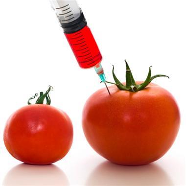 GMOd tomatoes