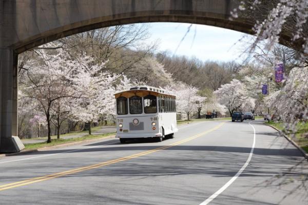 Newark Cherry Blossoms festival & trolley