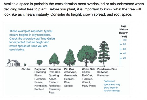 tree growth guide