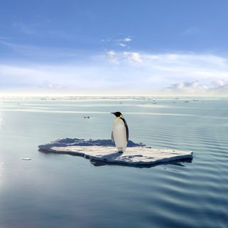penguin on diminished ice floe