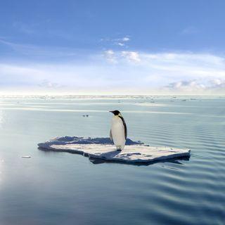 penguin on diminished ice floe