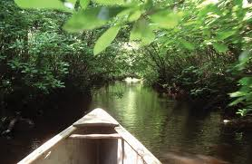 Pinelands in a boat