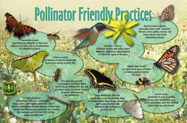 pollinator friendly actions