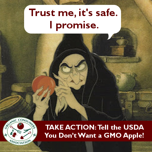 wicked witch says trust me GMO apple is safe