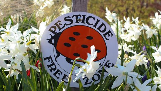 pesticide free zone ladybug sign